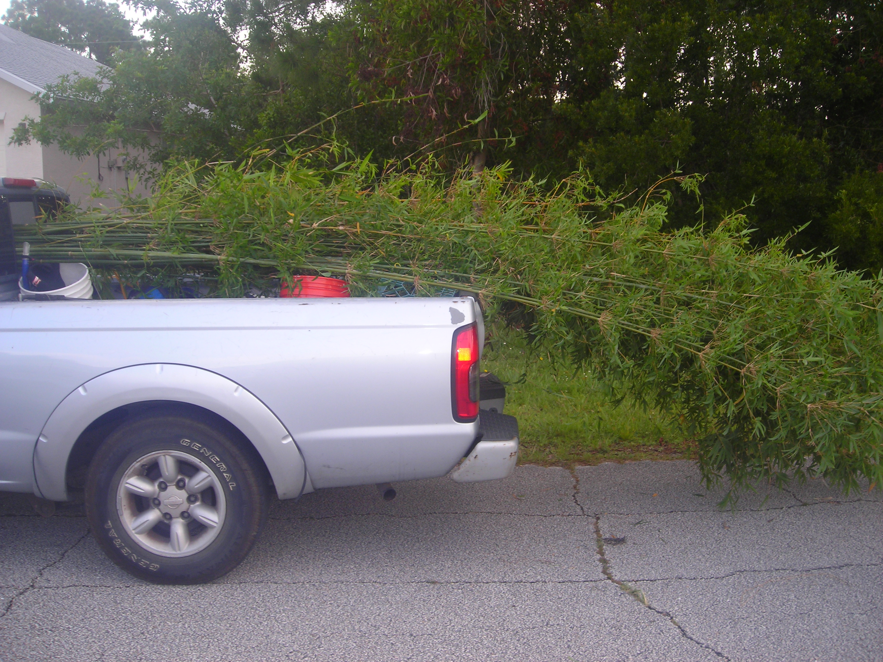My little truck with a LOT of bamboo