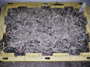 Mulch with hay