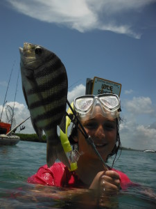 speared sheepshead