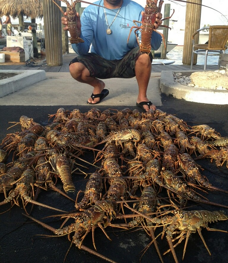 2013 mini season Lobster haul