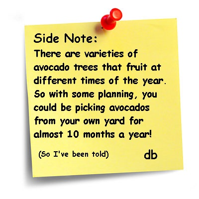 avocado side note