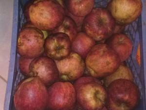Kentucky Apples