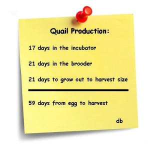 quail productions times
