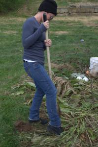 digging horesradish